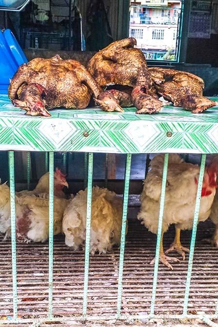 freshly butchered chickens in Philippines