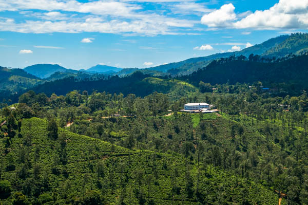 Ha Tea Plantation.