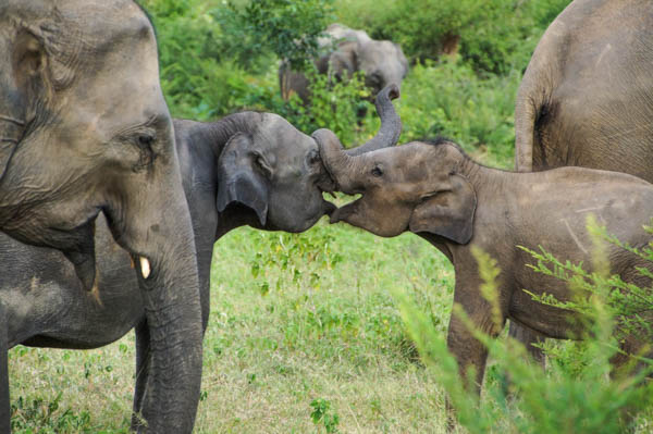 Two young elephants playing in the reserve.